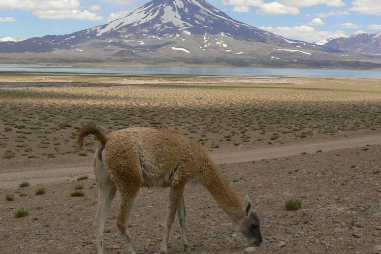 Permiso para viajar a Mendoza en cuarentena
