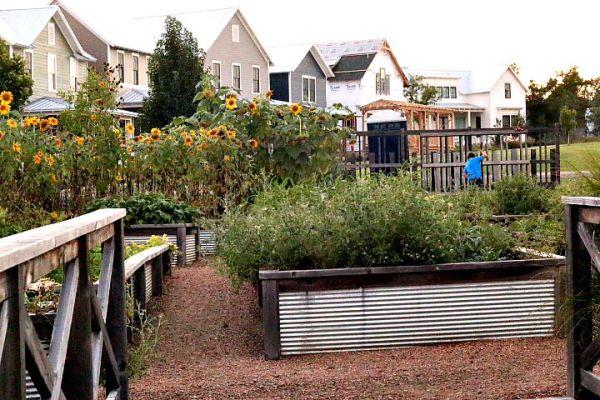 Community Gardens Carlton Landing