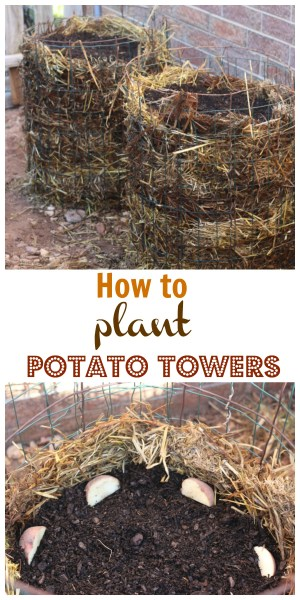 how to plant potato towers