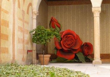 20121021-rosacortilemuseoperarenaverona