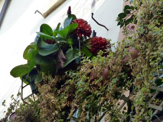 20121021-balconeverona