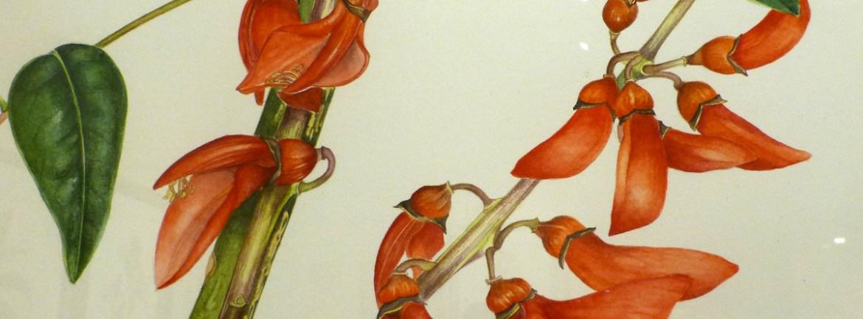 20121104-florapicta-museominiscalchierizzo-mostrapitturabotanica-verona