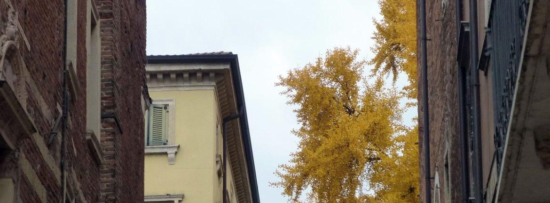 20121118-veronaviarchescaligeredismappa