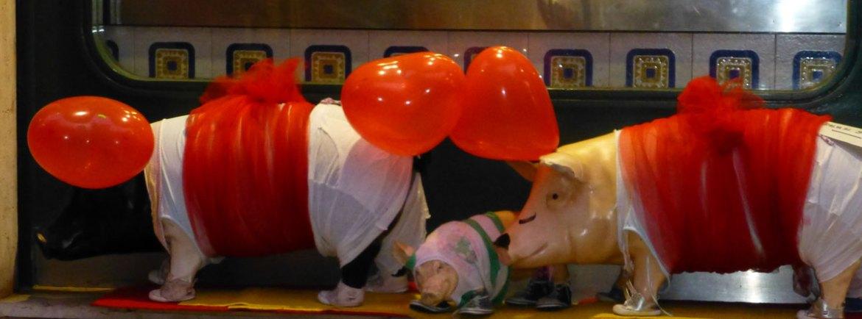 maialini con i cuori per san valentino e verona in love