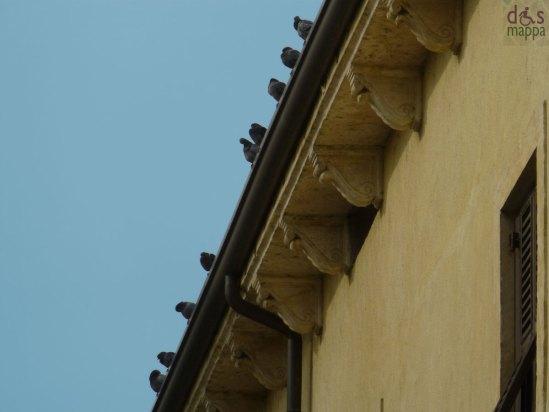 piccioni sul cornicione di un palazzo del centro storico di verona