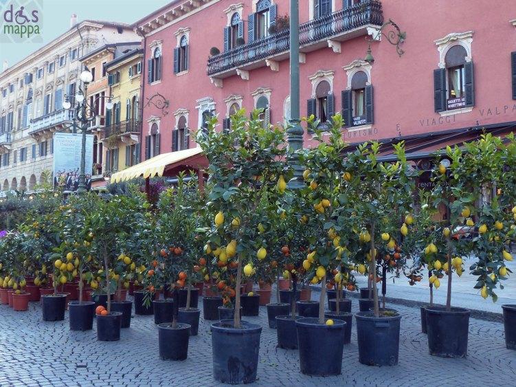 piante di limoni, aranci e mandarini sul Liston di piazza bra