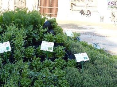 piante aromatiche a verona in fiore 2013