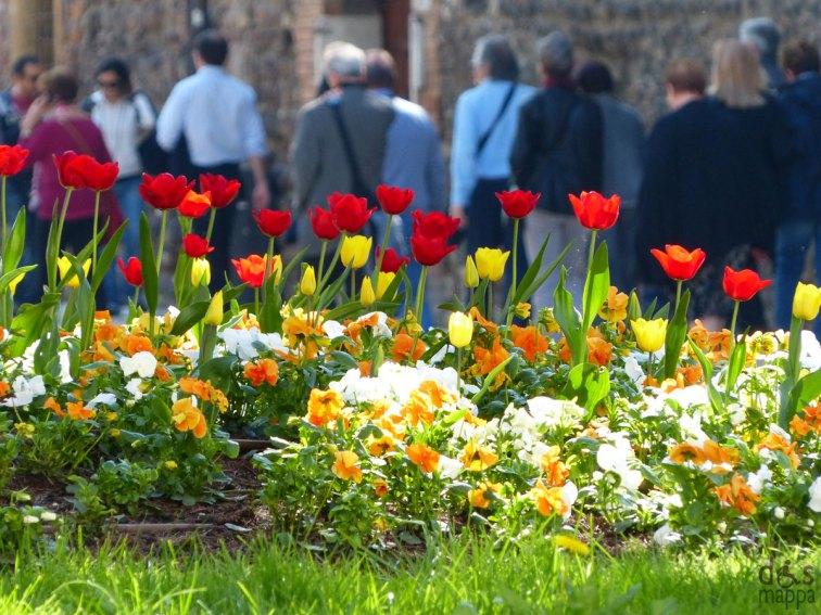 tulipanituristiverona