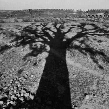 Mostra di René Burri a Verona - Ombra di un'albero, Rohtas, Pakistan occidentale, 1963