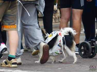 cane alla partenza della straverona 2013