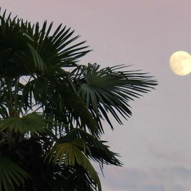 Palma e luna