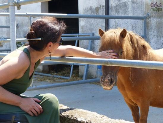 cavallo-parco-adige-sud-verona