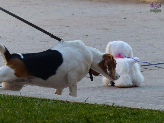 20131214-cane-peluche-verona