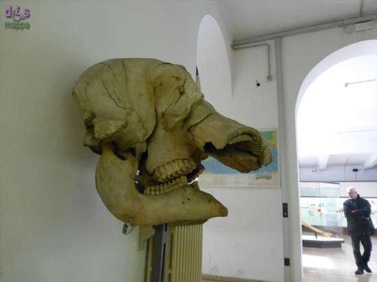 20130207 Museo di Storia Naturale Verona accessibile dismappa 609