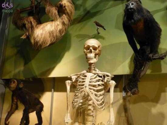 20130207 Museo di Storia Naturale Verona accessibile dismappa 831