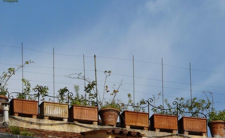 20090927 vasi fiori tetto piazza san nicolo verona 45