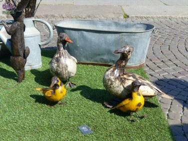 20140329 Animali ferro riciclato Verona in fiore uccellini papere pulcini 354
