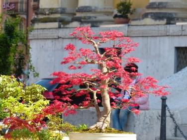 20140329 Verona in fiore Piazza Bra 26