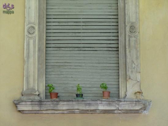 20140417 Finestra Verona piantine basilico