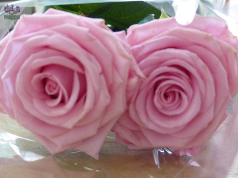 20140522 Benedizione rose Santa Rita Verona 22