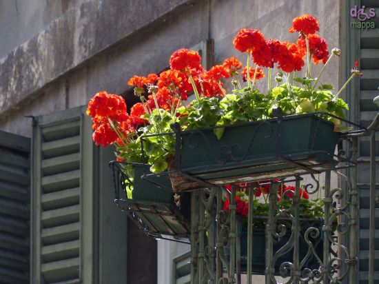 20140525 Balcone gerani rossi Verona