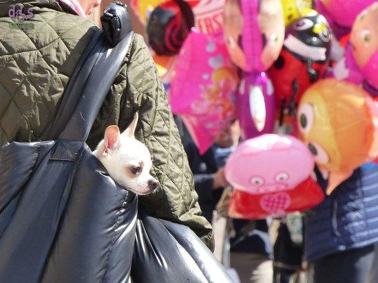 20150419 Cane nella borsa Piazza Bra Verona dismappa