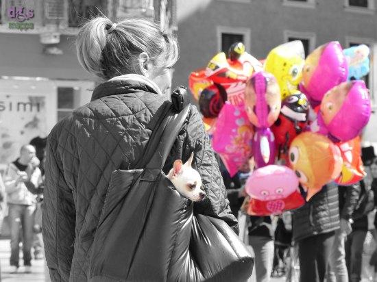 20150419 Cane nella borsa Piazza Bra dismappa Verona