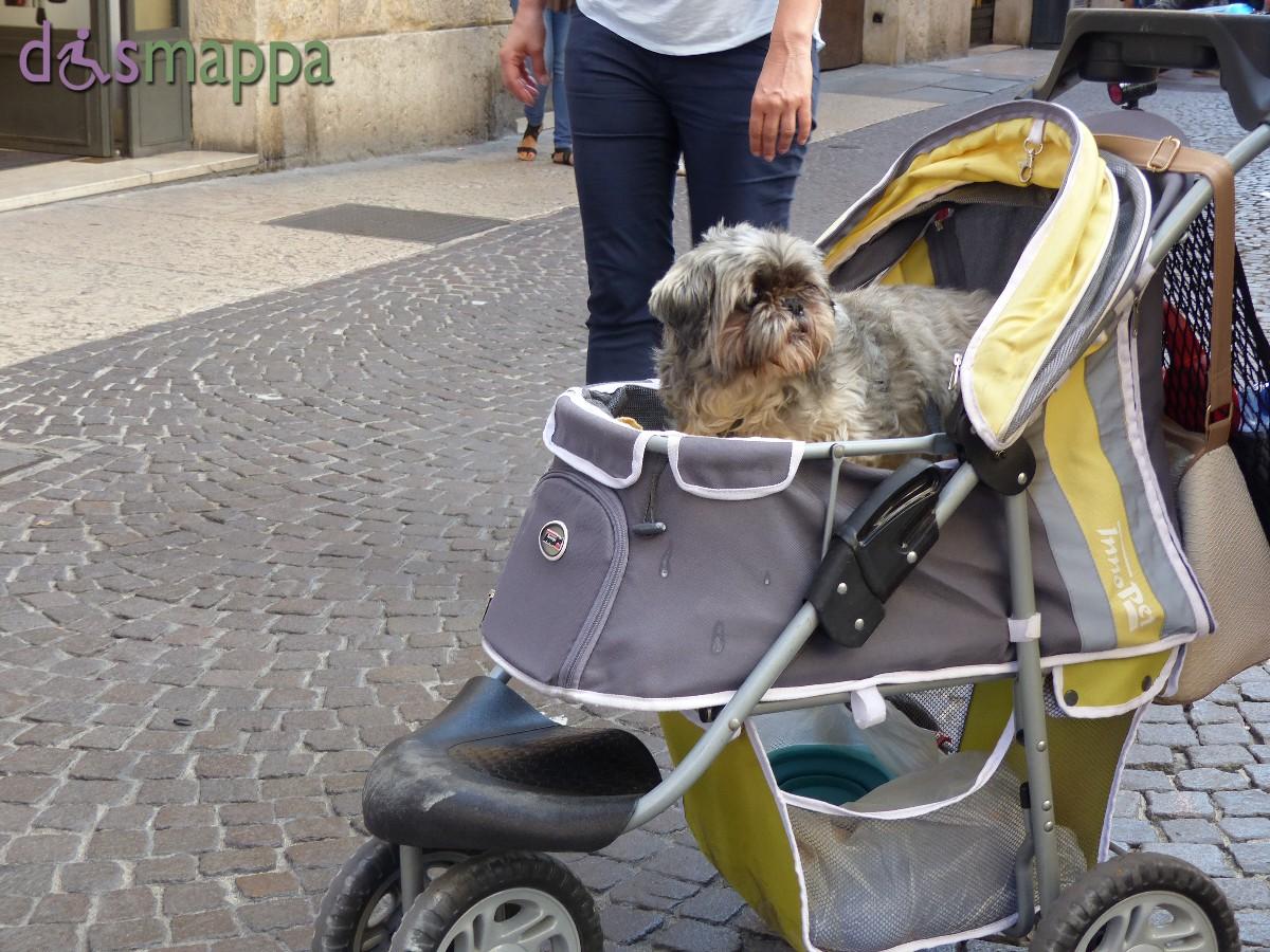20150920 Cane carrozzina Verona dismappa