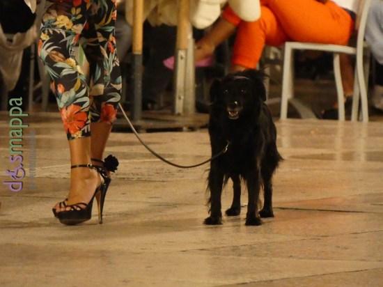 20160807 Tropical pattern black dog Verona dismappa