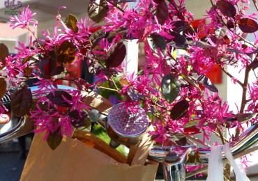 20150328 Verona mio fiore dismappa 69