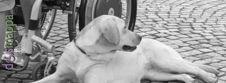 20170617-Frida-sedia-rotelle-Verona-dismappa