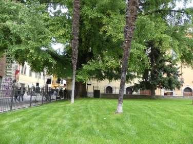 Il prato e i due maestosi Gingko centenari ai giardini diPiazza Indipendenza a Verona