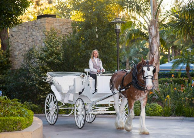 Carriage Rides Romantic