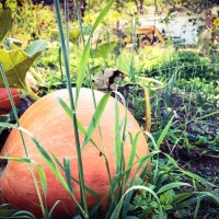 Top Pumpkin Patches & Corn Mazes In Sonoma County