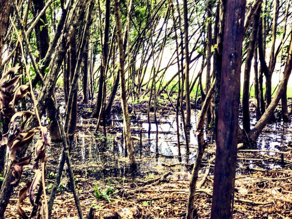 Hacienda Tres Ríos