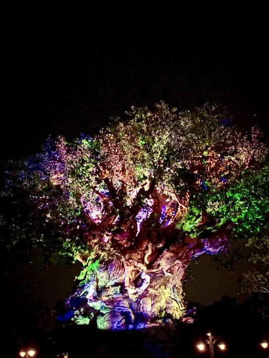 Disney After Hours Disney's Animal Kingdom Walt Disney World #DisneyAfterHours