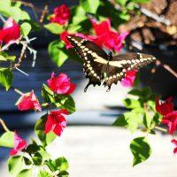Garden Outdoor Environment