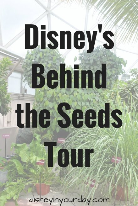 Behind the Seeds - Disney in your Day
