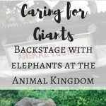 Caring for Giants backstage tour