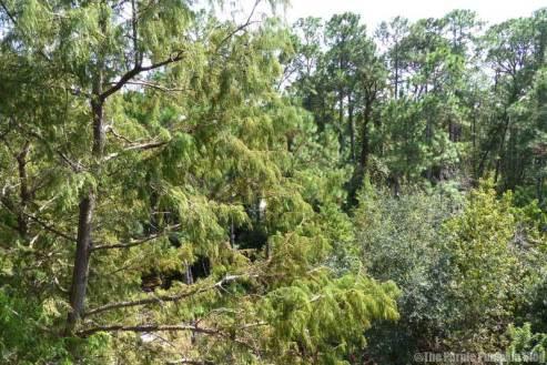 Disney's Wilderness Lodge - Woods View Room