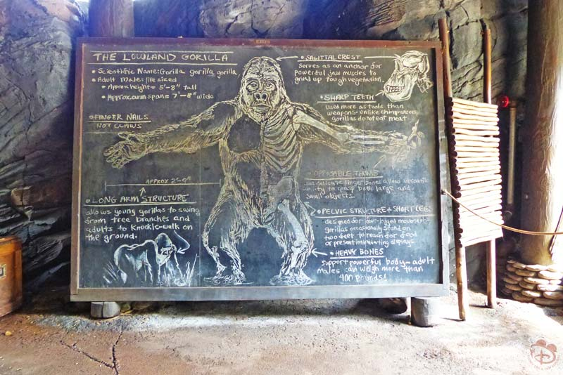 Pangani Forest Exploration Trail - Disney's Animal Kingdom
