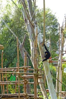 Maharajah Jungle Trek - Disney's Animal Kingdom