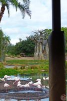 Kilimanjaro Safaris - Disney's Animal Kingdom