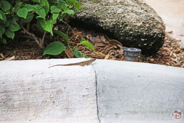 Lizard at Disney's Vero Beach Resort