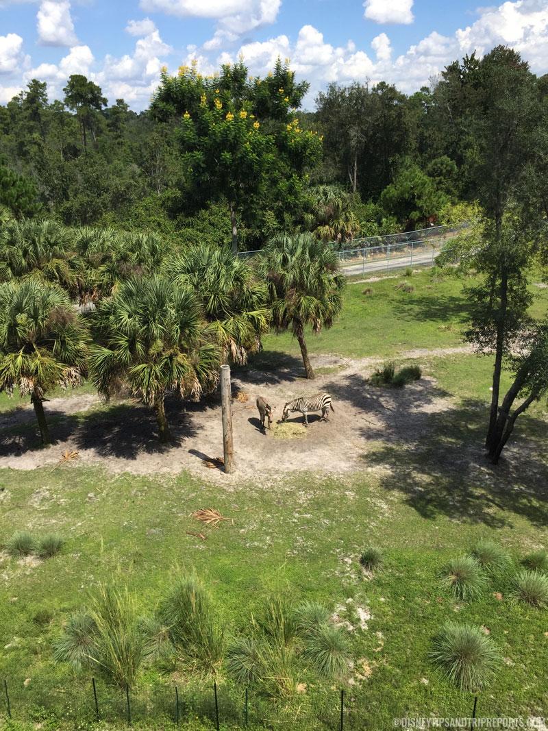 Animal Kingdom Villas - Pembe Savanna
