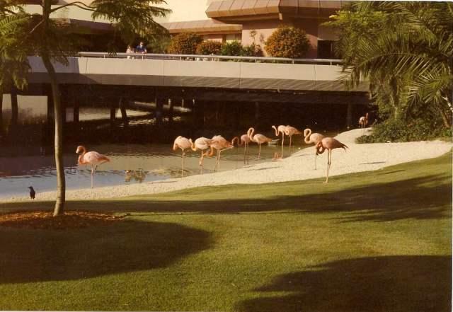 Flamingos- Johnny Kunzer