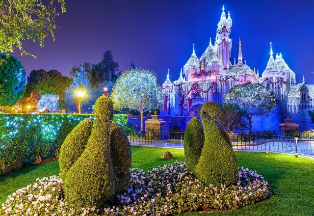 christmas-swans-disneyland-night copy