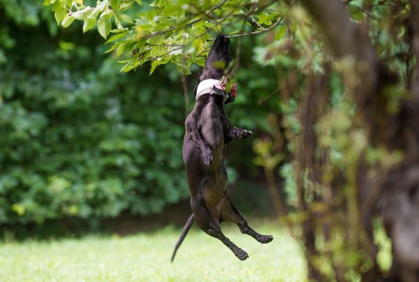 Nikon-D810-dog-tree-jumping