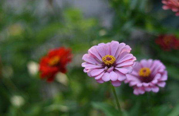 nikon-d810-flowers