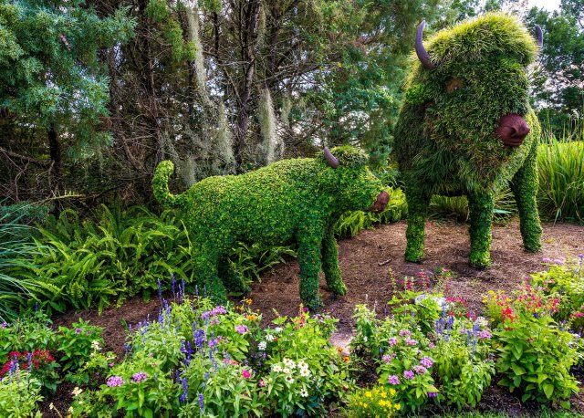 wilderness-lodge-buffalo-topiary